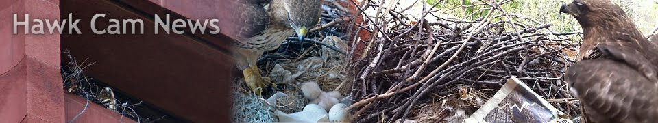 Hawk Cam News