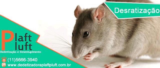 Desratização | Dedetização de Ratos | Leptospirose | Doença | Tratamento | São Paulo