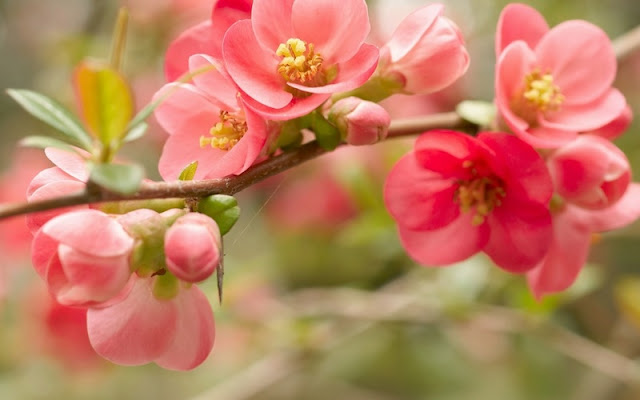 фото цветков