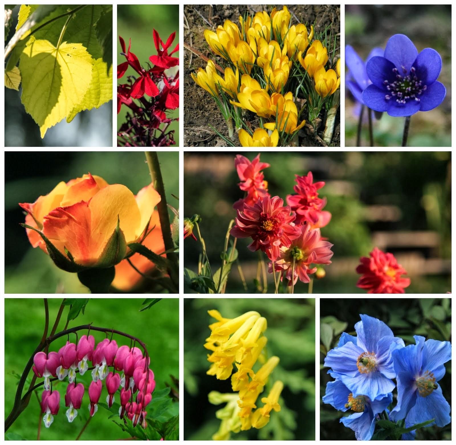 Charlottas trädgårdsfärger