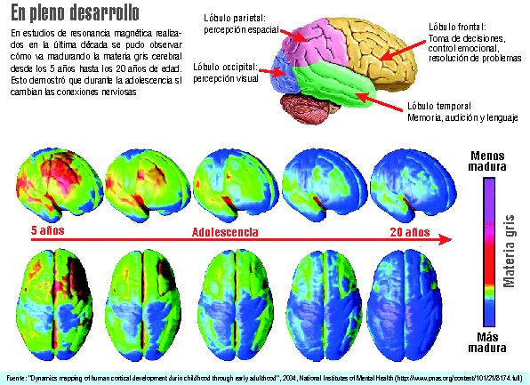 Cerebros de los adolescentes