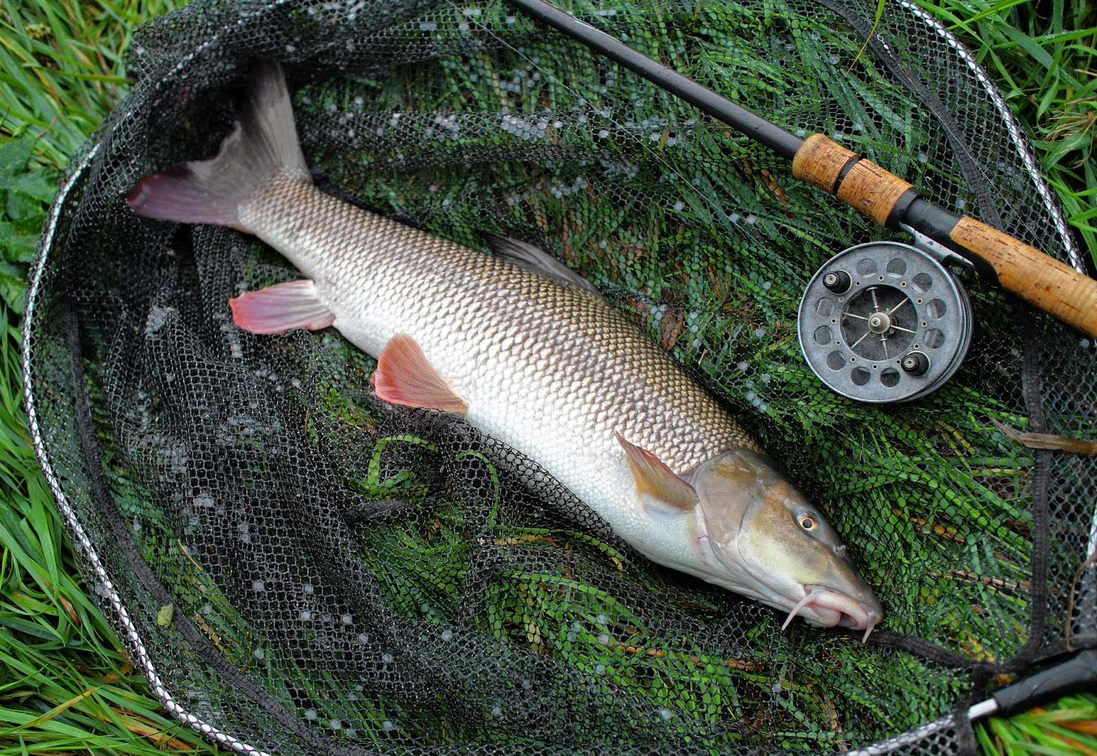 Vince Cater Angling Adventures: Are there any Barbel left ...