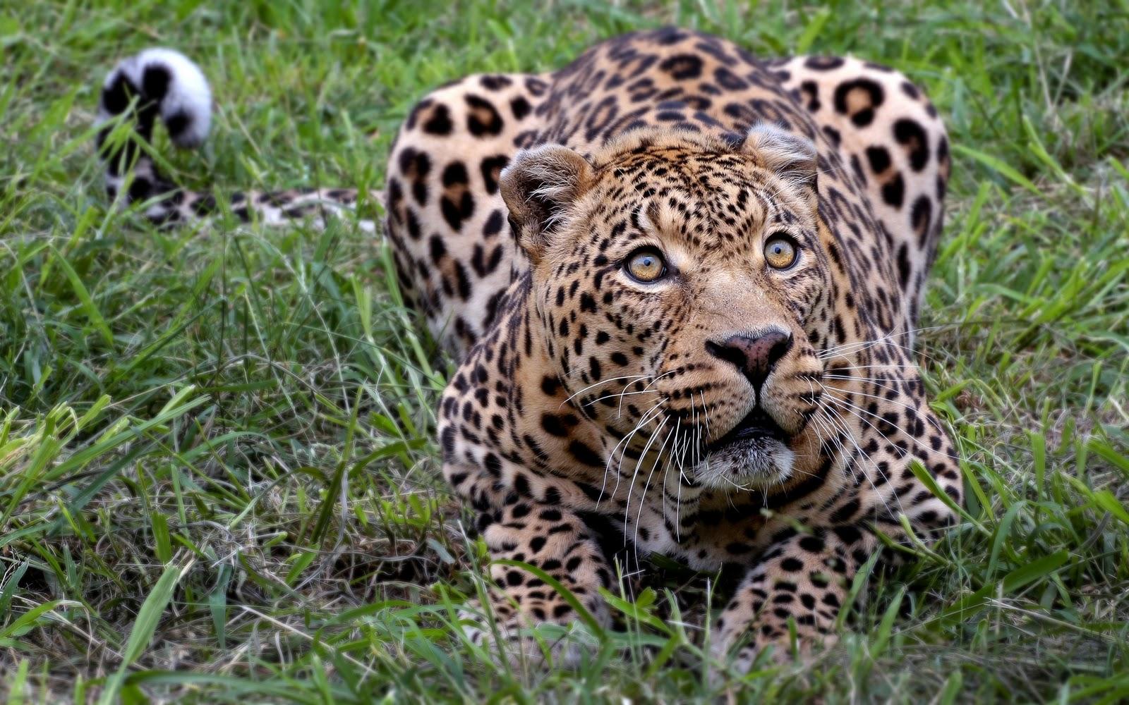 http://2.bp.blogspot.com/-wmA-G-Lsg9Y/TqvYV1GOsOI/AAAAAAAAABI/RNrcchvOigk/s1600/nature+TheWallpaperDB.blogspot.com+_+%252836%2529.jpg