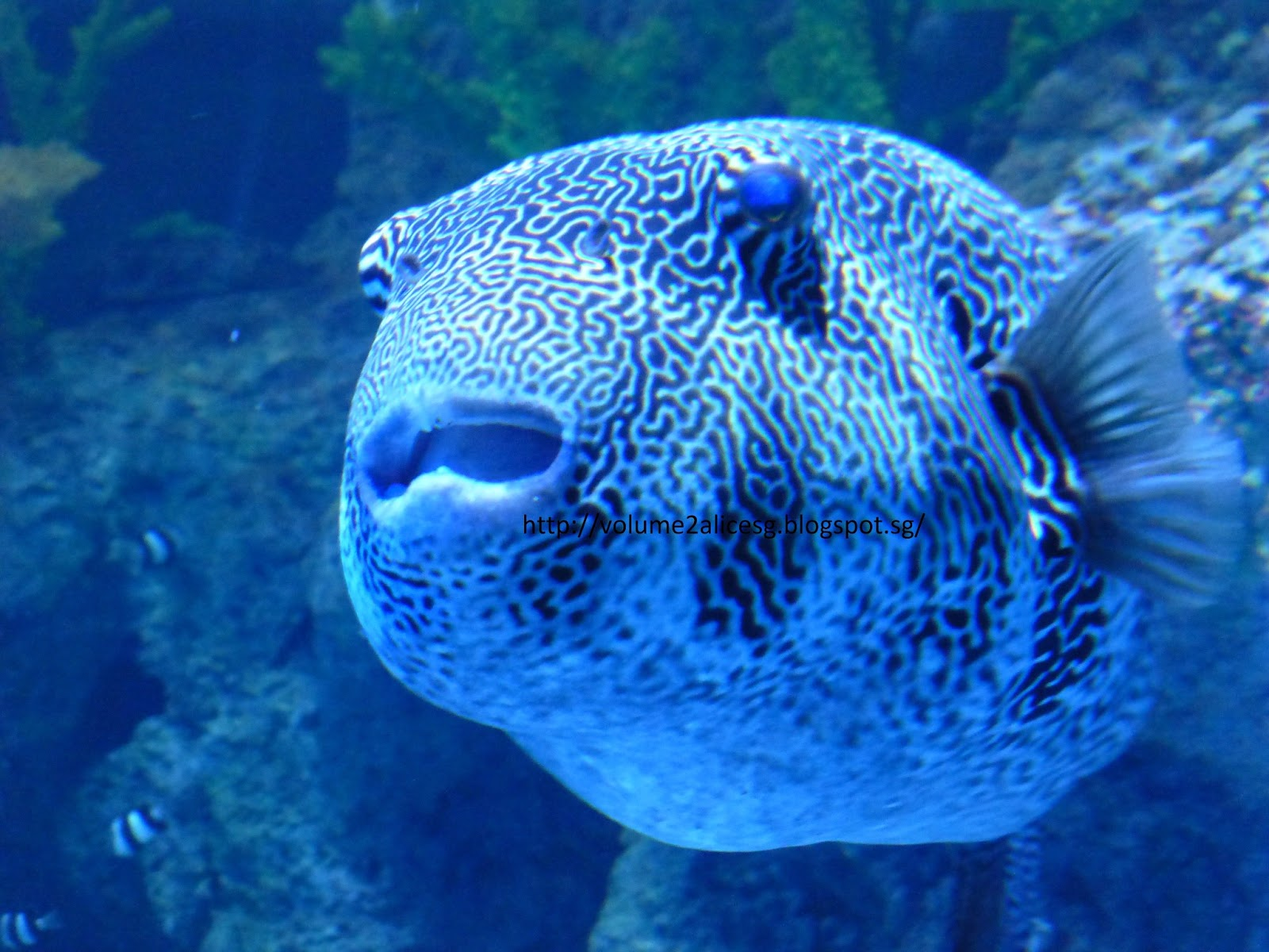 Fish in sea aquarium - There S So Much To View And So Many Different Species Of The Fishes That Many I Am So Alien With If Not Mistaken The Below Fish Is The Long Horn Cowfish