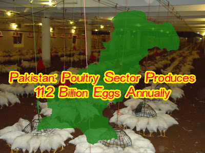 Pakistan: Poultry sector produces 11.2b eggs annually