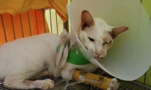 Kucing Ini Tetap Menyusukan Anaknya Walaupun Cedera Parah Dilanggar