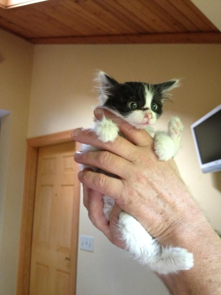 kitten in hands, funny cats, cat photos, cat pictures