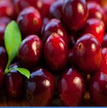 Cranberry Juice Extract
