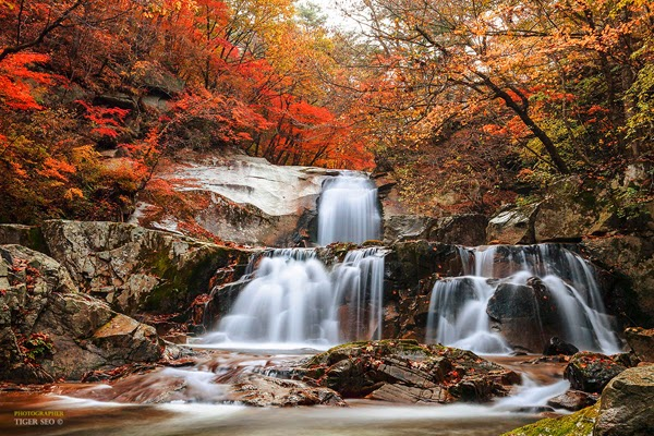 Marvelous Photography by Tiger Seo