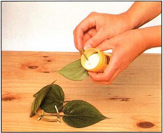 Окуните основание каждого черенка в раствор гормона, способствующего укоренению, затем вставьте в горшок диаметром 7,5 см, наполненный почвенной смесью для черенков