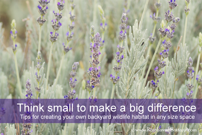 Think small to make a big difference tips for creating your own backyard wildlife habitat in any size space