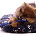 Pets também precisam cuidar da saúde bucal