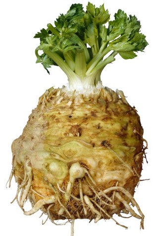 celery root you need 1 kg celery root peeled quartered