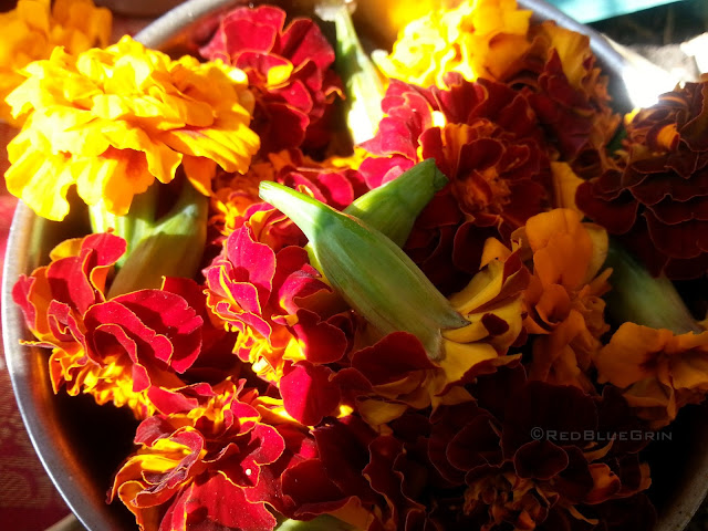 Marigold flowers collected for worship.