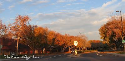 turning leaves in glendale az