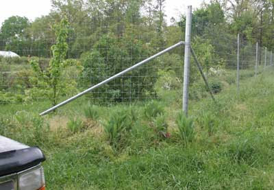 DEER EXCLUSION FENCING EXPERIMENT - CACAPON INSTITUTE