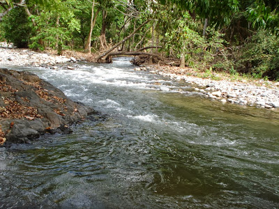 Río Guacimal