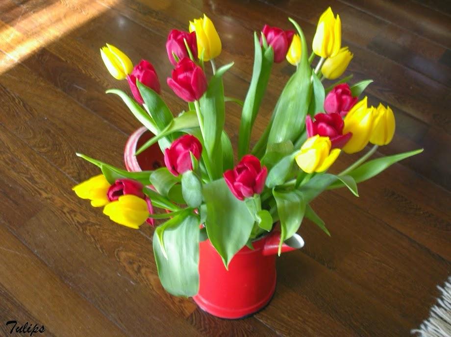 Early tulips