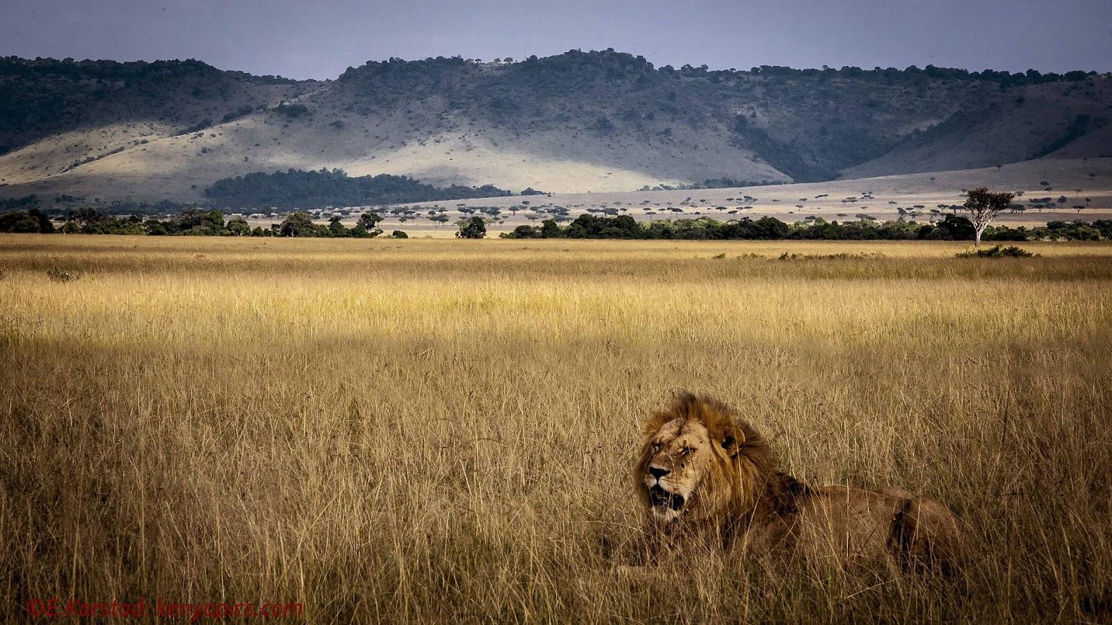 Elsen Karstads Pic A Day Kenya The Mara Triangle Masai Mara Kenya