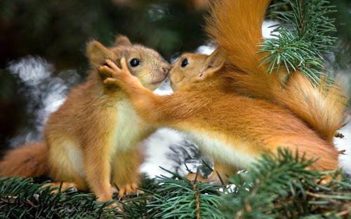 Động vật hôn nhau