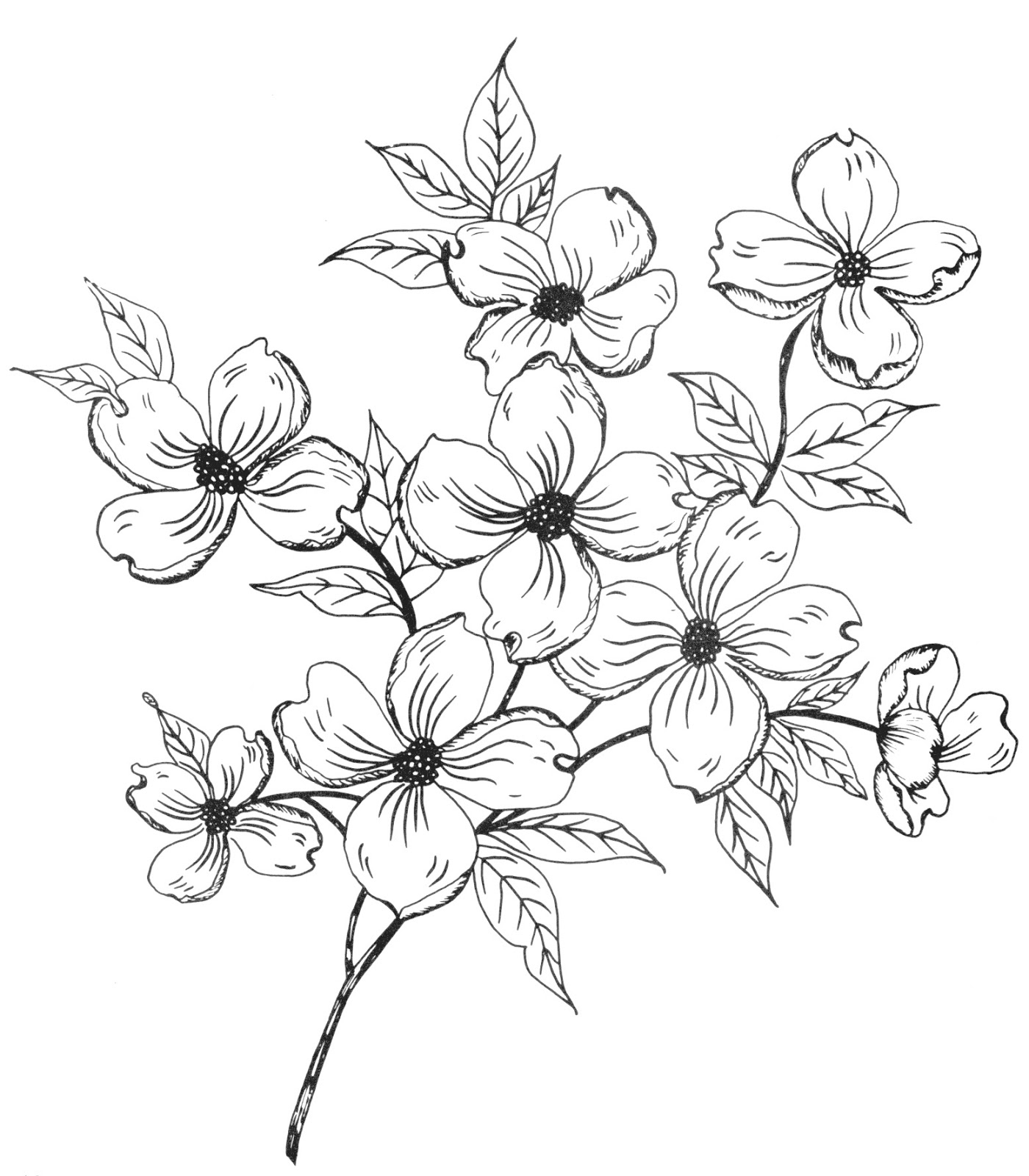 Mexican Flower Drawing