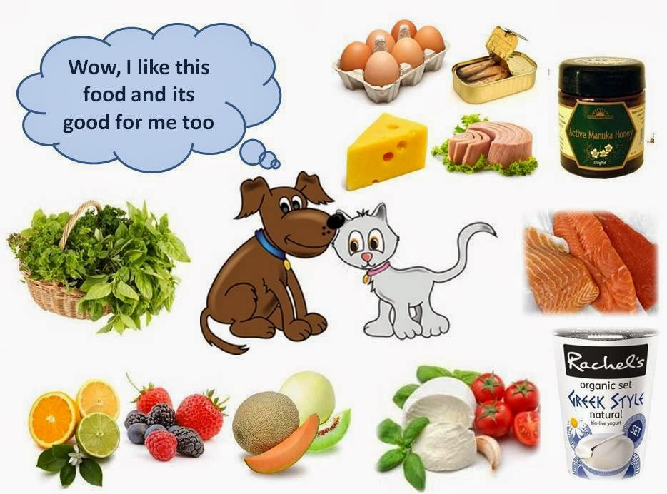 Foods Bad For Cats And Dogs