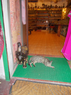Cat in a Curio shop on Princess Street in Fort Kochi.
