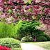 Spring Season - Make Our Garden or Outdoor a Better Place