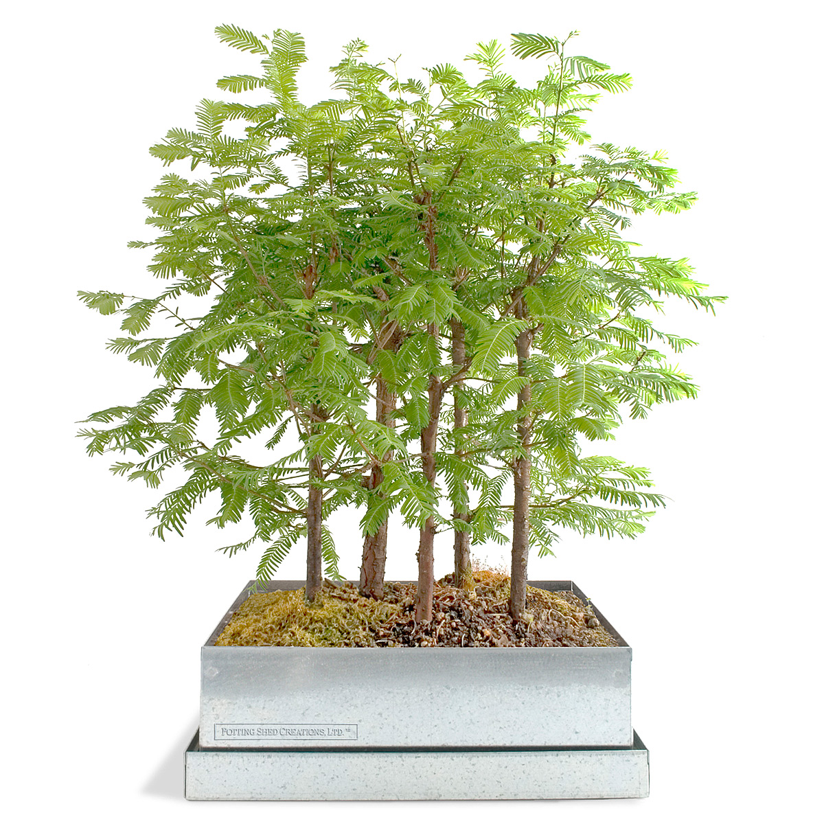 The Hip Subscription DIY Bonsai Forest