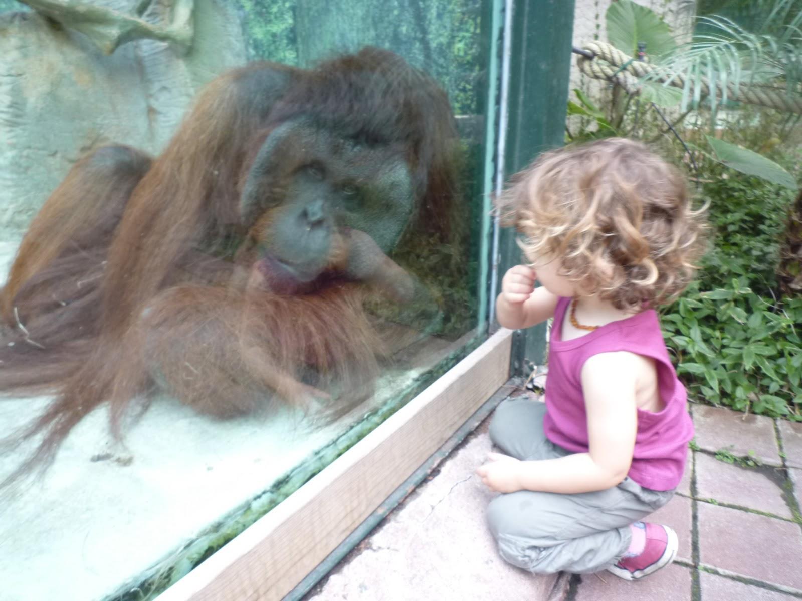 Notre week end au zoo de beauval dans la peau d 39 une fille for Appart hotel zoo de beauval