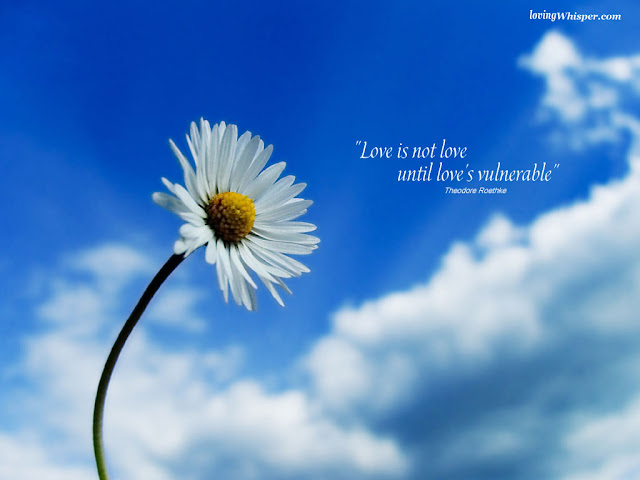 Best Jungle Life love is vulnerable, love is a flower, flowers wallpapers