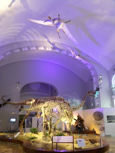 Natural History Museum Helsinki