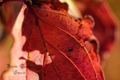 ein verfärbtes Blatt im Herbst