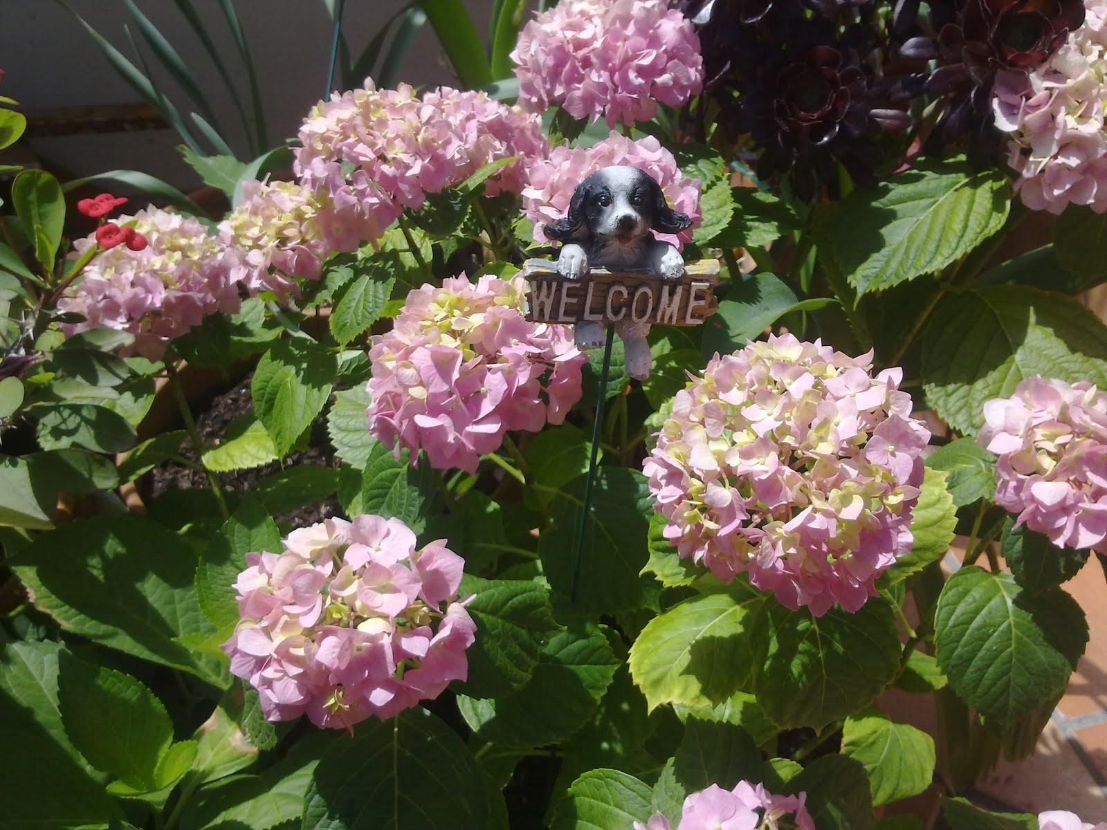 Una flor en mi jardín