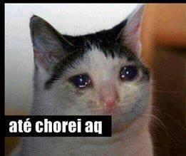 gato chorando até chorei aqui
