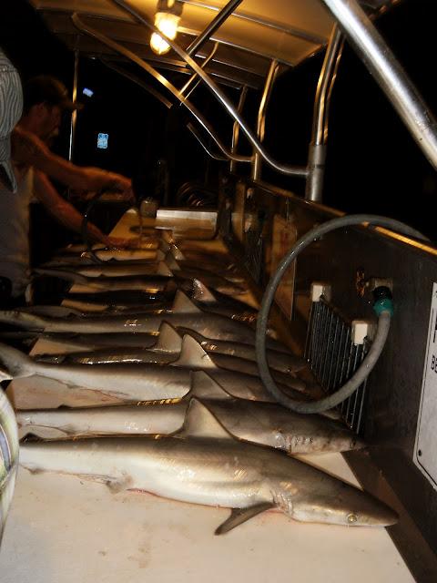 Port Canaveral Shark Fishing