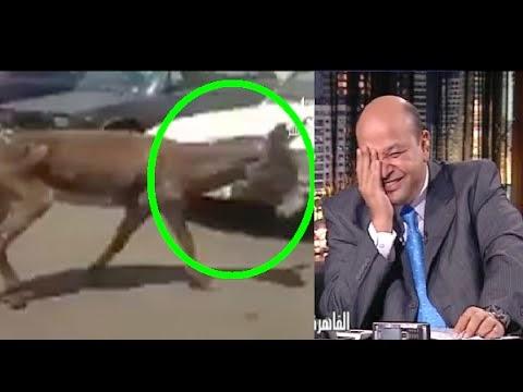 دخول حمار إلى مطار القاهرة الدولي وشاهد رد فعل وزير الطيران على ذلك  !!