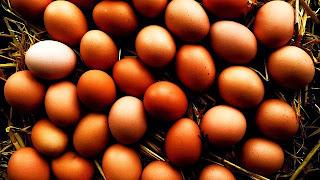 manfaat telur, telur mentah, telur ayam, telur bebek, khasiat telur