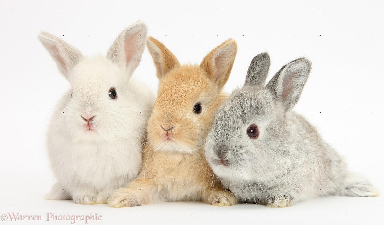 gambar kelinci lengkap kumpulan gambar lengkap