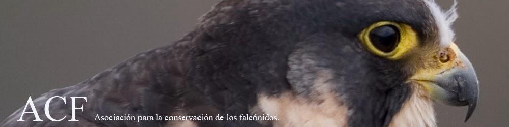 ACF Asociación para la Conservación de los Falcónidos
