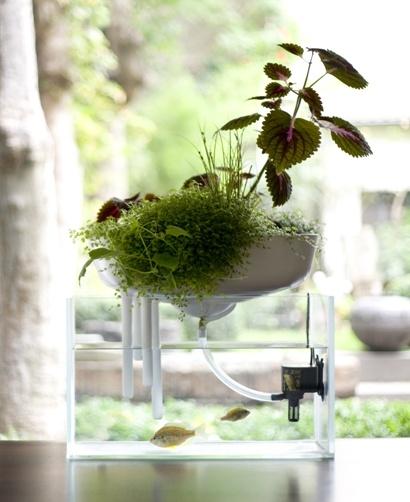 Fotos de dise os de peceras jard n y terrazas for Peceras de jardin
