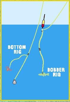 Top 10 fishing tips bigtacklebox for Yellow perch fishing secrets
