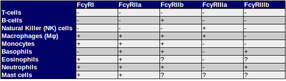 Expression pattern of the major Fc gamma Receptors (FcγRs) in human - cells included in the list T-cells, B cells, macrophages (Mφ), neutrophils, Natural Killer Cells (NK Cells), monocytes, and mast cells