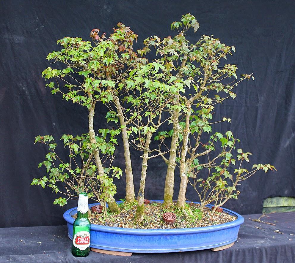 Little Cornish Trees May 2014