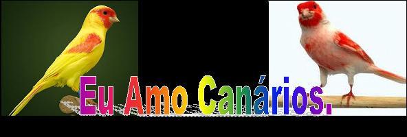 GOSTO DE CANÁRIOS BELGAS