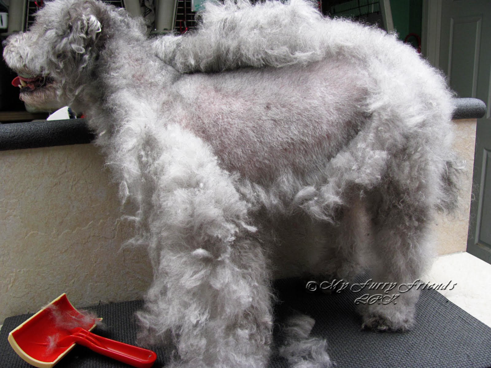 Pet Grooming The Good The Bad The Furry It Never Fails