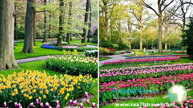 حديقة الورود في هولندا