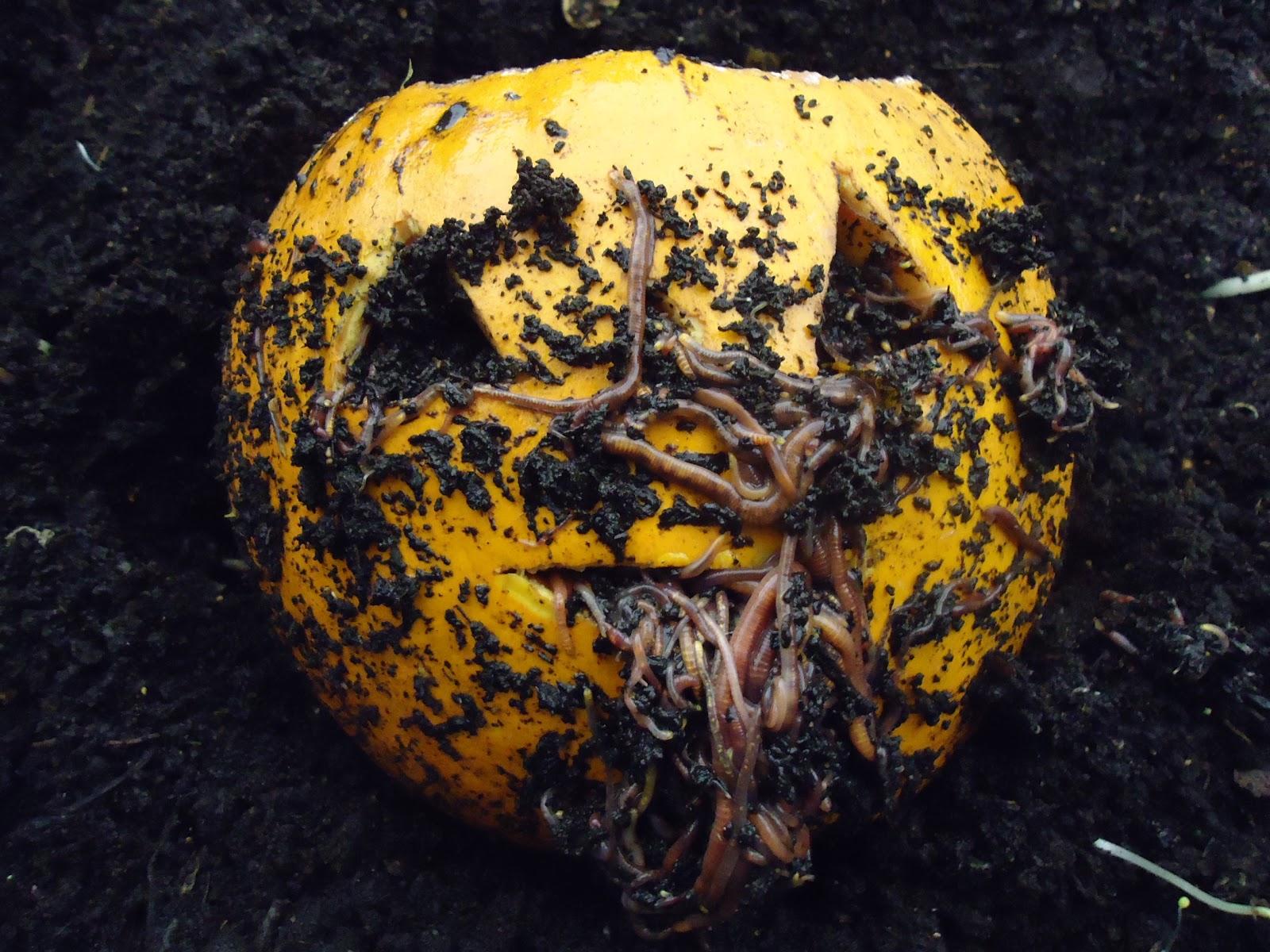 worm wigwam spooky pumpkins