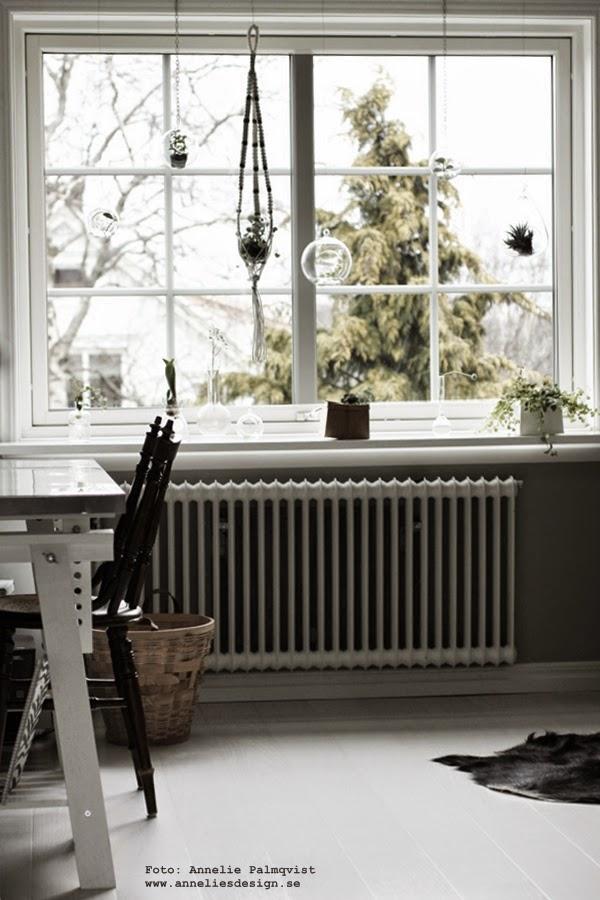 fönster med glaskupor och gröna växter, glaskupa, grön växt, plättar i luften, ampel, amplaar, makramé, vitt, webbutik med inredning, inredningen, webbutiker, webshop, interior, interiör, stort fönster, ateljé, arbetsrum, hemmakontor, inredningsblogg, blogg, bloggar, tipd, inredningstips, vårkänsla, vår, i fönstret, fönster, ampeln, madam stoltz,