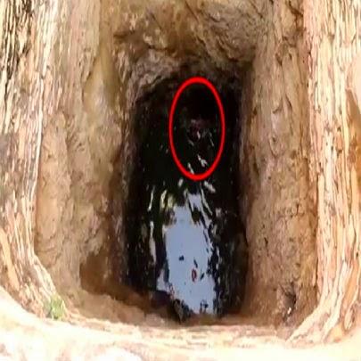 Rapaz observava poço de água e fica chocado com o que viu lá dentro